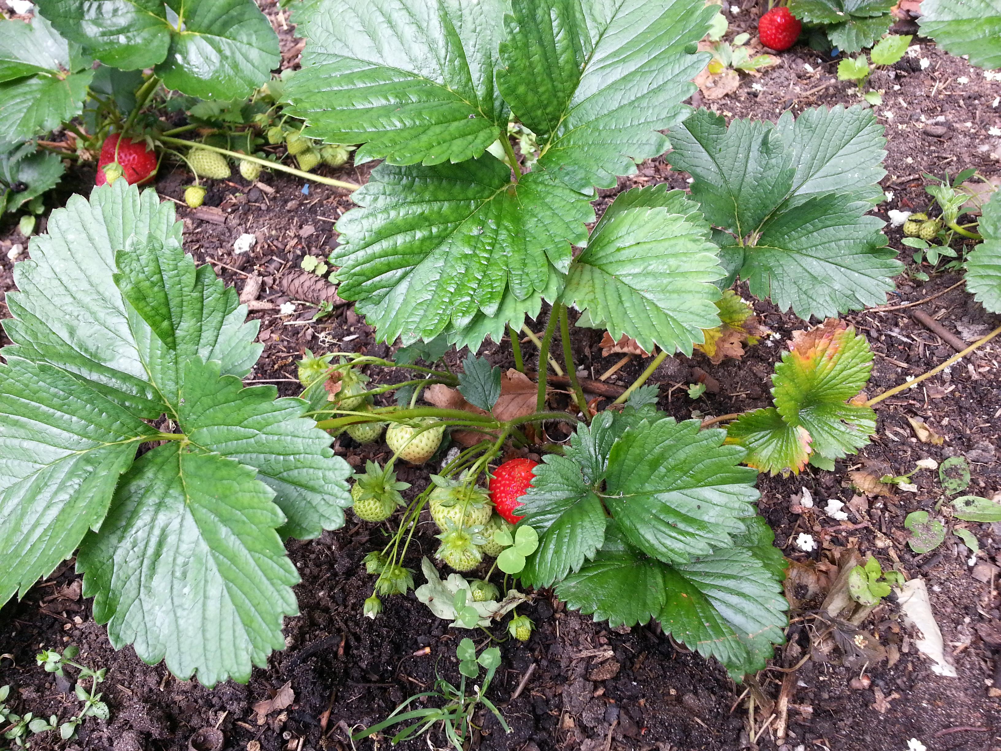 Frisches Obst und Gemüse aus eigenem Anbau