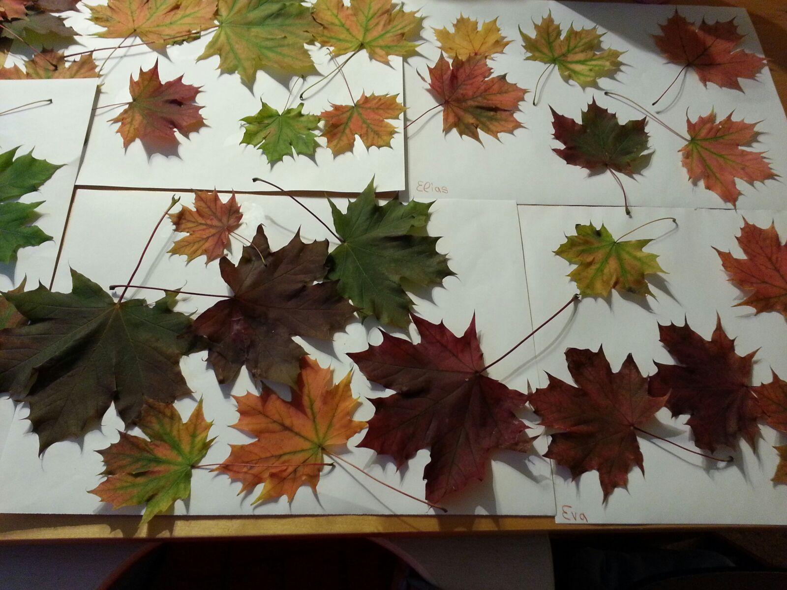 Der Herbst, der Herbst…