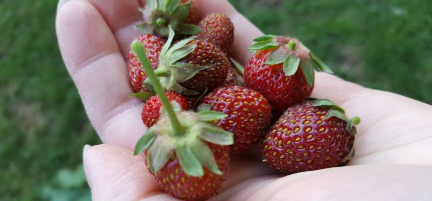 Unser erstes Obst und Gemüse