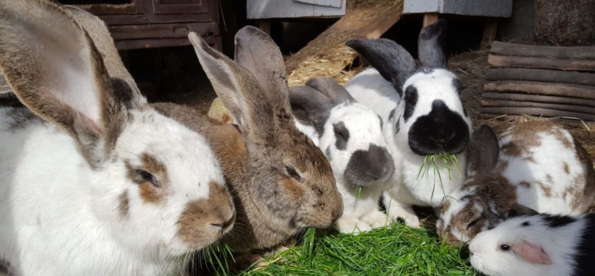 Unser Fokus: Tiergestützte Pädagogik