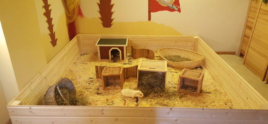 Streichelzoo mit Meerschweinchen und Kaninchen