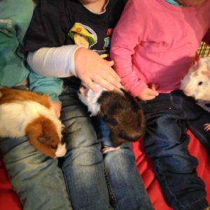 Tiergestützte Pädagogik 2018 mit Kaninchen, Meerschweinchen und Hunden