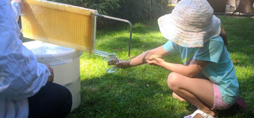 Leckeren Honig frisch vom Imker