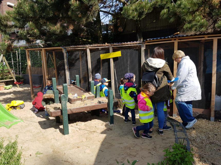 Löwenzahn Osterfeld besucht unsere Hühner