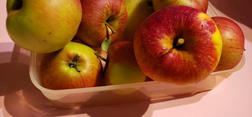 Die Apfel-Erntezeit beginnt!